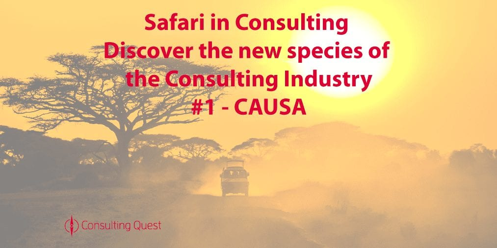 Safari in Consulting #1: CAUSA Consulting